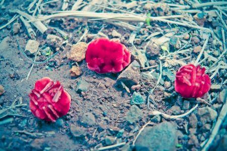 Red velvet mite after rain