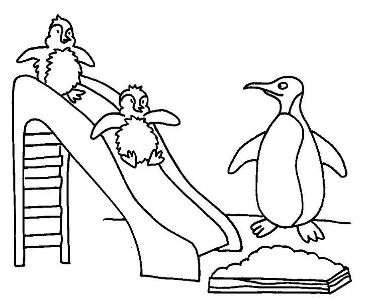 Penguin Coloring Pages To Print