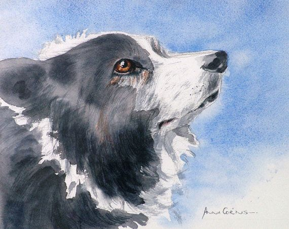 Border Collie Watercolour Print - A4 - Bryn, Old Dog, 5% of profits to Cornwall Air Ambulance Trust #dogs #art