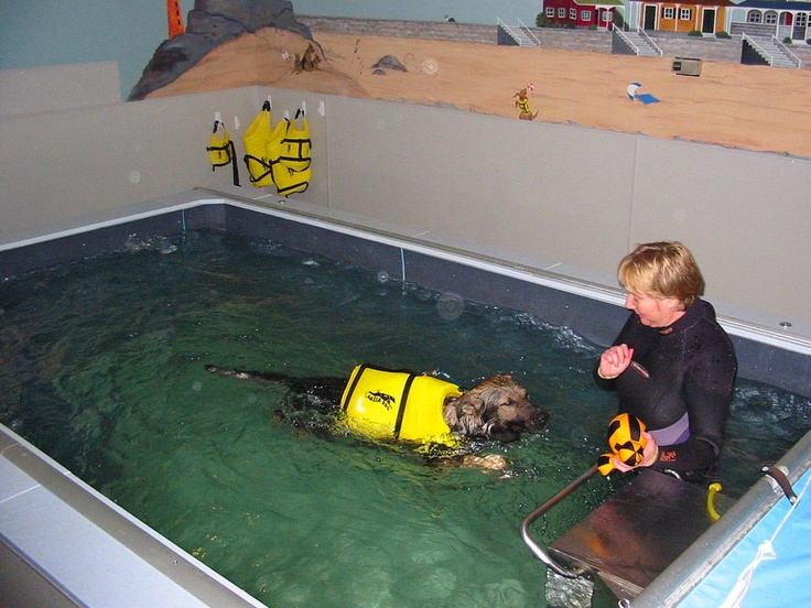 17 Best Images About Canine Hydrotherapy On Pinterest Swim Endless Pools And For Dogs