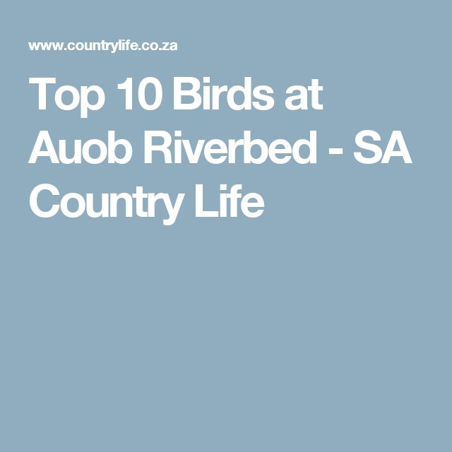 Top 10 Birds at Auob Riverbed - SA Country Life