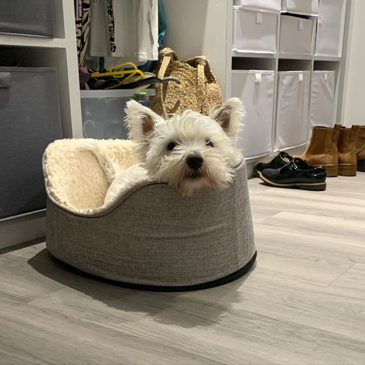 Pin on west highland white terriers