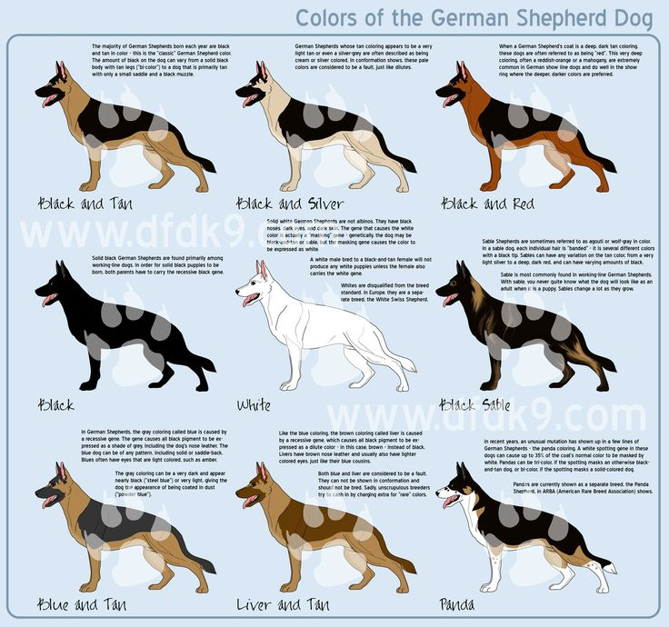German Shepherd Colors by *MauserGirl on deviantART misc