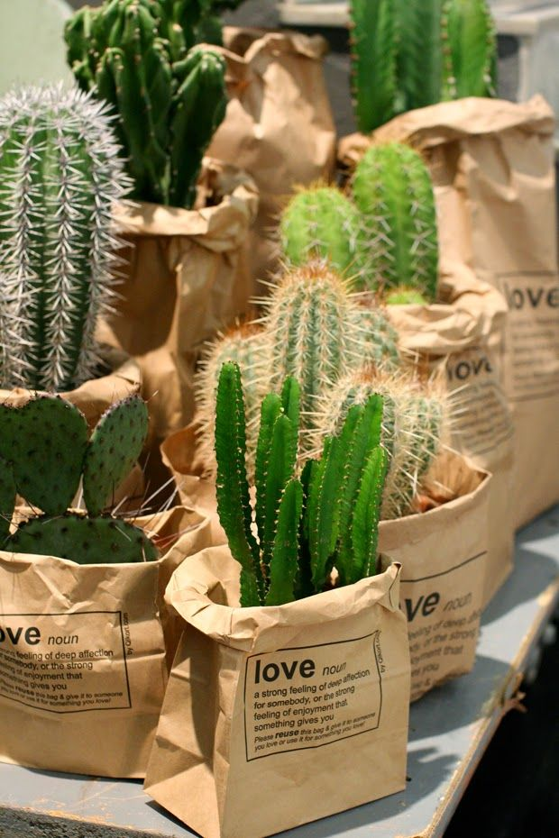 cactus plants in brown paper bags