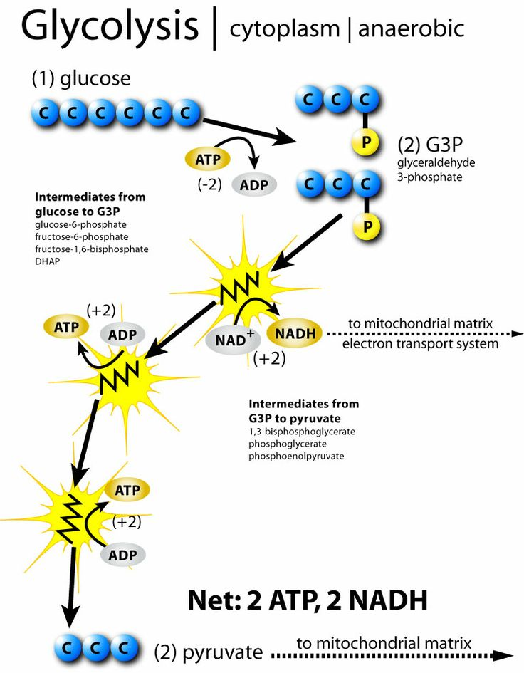 Overall process of glycolysis: glucose is formed into 2 molecules of pyruvic acid, 4 protons and 4 electrons; 2 electrons and 1 hydrogen ion combine with NAD+_ to form NADH, leaving behind two hydrogen ions (protons) + energy stored by making a net total of 2 ATP molecules; from here, the cell has to do something with the pyruvic acid and NADH formed: either fermentation or cellular respiration (process whereby sugar is burned for fuel)