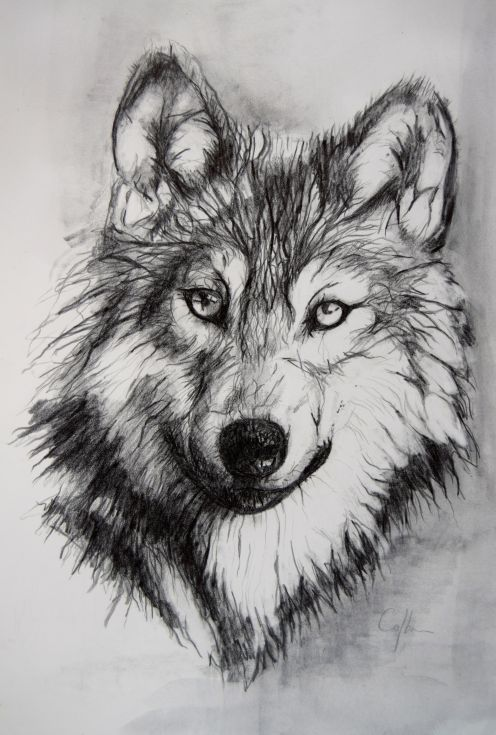 she wolf essay Then with his great grey head on his paws he closed his eyes this fine animal   she heard the quickening thud of wild wolves as they began to approach her.