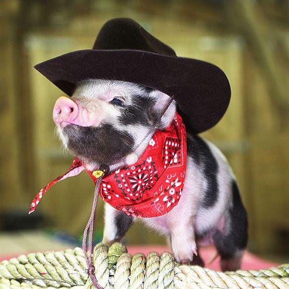 cute little pig dressed as a cowboy