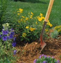 All About Garden Mulches: Gardens Beds, Gardens Mulches Thi, Money Sav Landscape, Flowers Beds, Yardgarden Ideas, Plants Mulches, Yard Gardens Ideas, Mulches Beds Landscape, Gardens Tips
