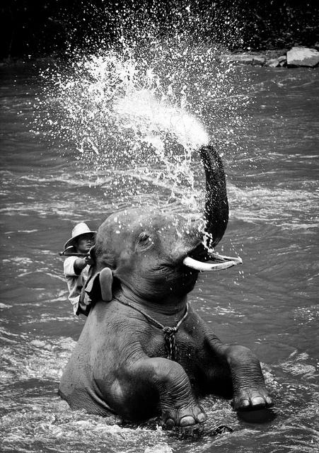 Elephant bath time, Chiang Mai, Thailand