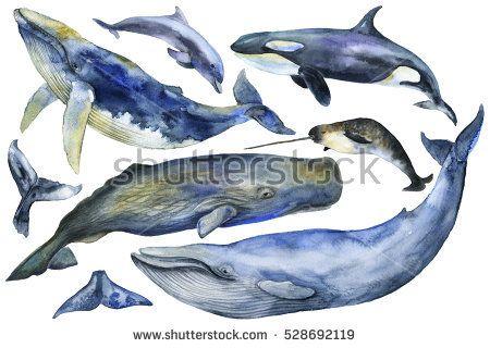 Watercolor hand painted Marine Mammals.