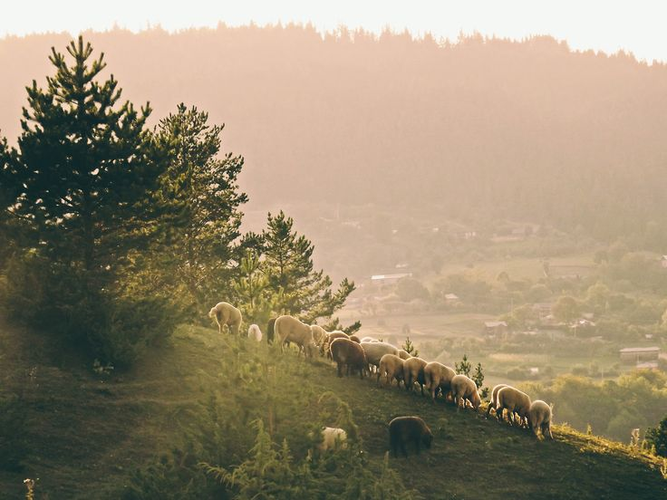 The sunset and the sheeps