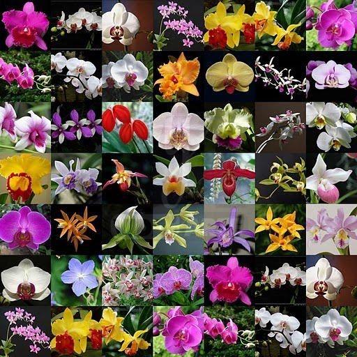 de los suelos de Venezuela en esta muestra de orquideas y otras flores