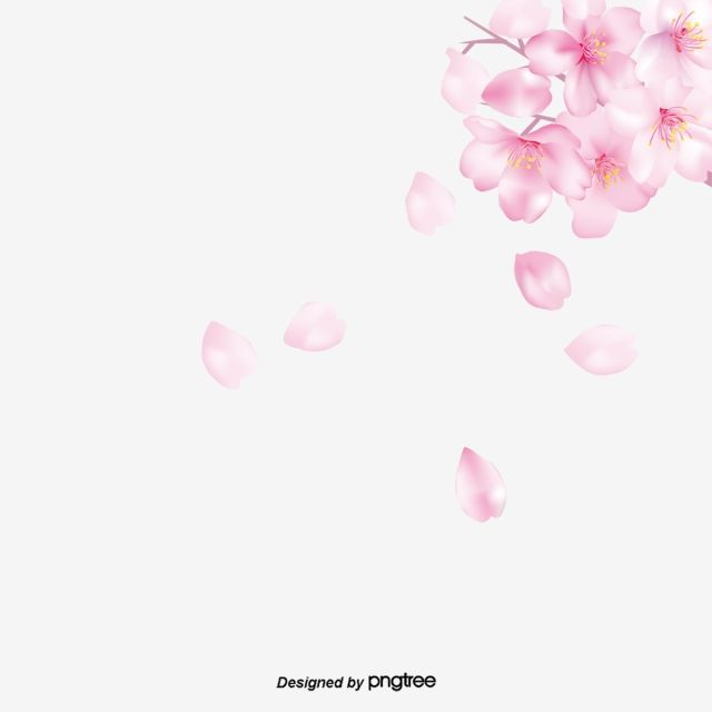 Pink Cherry Blossom Falling Elements Painted Peach Color Cherry Blossoms Png Transparent Clipart Image And Psd File For Free Download Cherry Blossom Background Cherry Blossom Cherry Blossom Petals