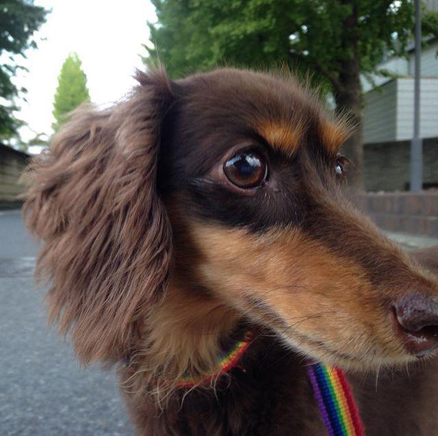 . おはようございます . 私は今日から2連休 . 海に行きたかったけど . 千葉北&鎌倉共に微妙なので . 本日はNO SURFとしました . ロコとルーティン行けたので . 陸トレ出来たのでOK . 皆さん良い週末を❗️ . #ワンコ #ミニチュアダックスフンド #チョコタン #癒し犬 #愛犬  #朝のルーティン #お散歩 #体重3.8kg #10歳 #ロコ #ロコ姫 #家族の一員 #短足部 #女の子 #肉球クラブ  #dog #love #dachshund #love_dog #family #happy_dog #dog_life #dogs #MiniatureDachshund #loco #dogs_of_instagram #love_dachshund #dog_life