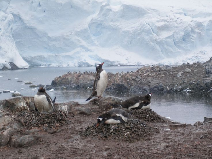 Goin' Feral One Day At A Time: Antarctica