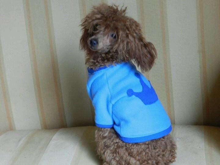 Para el rey de la casa #ropa #perros #mascotas .Más info en www.urbecom.com/puppy