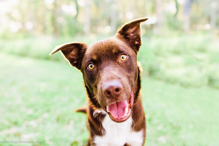 Pin on Dogs available for adoption