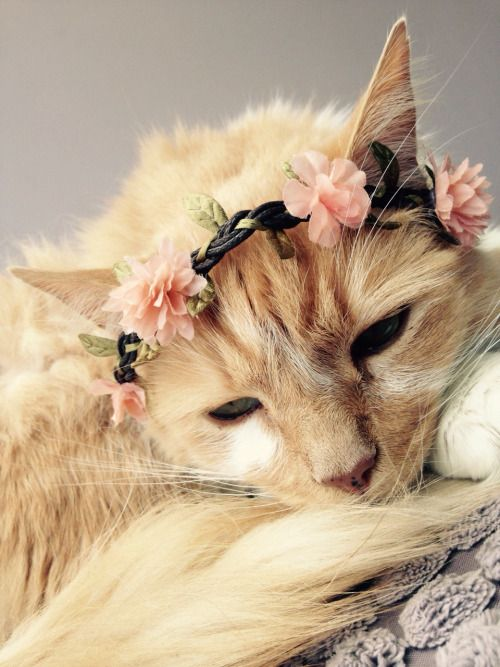 My Cats And My Flower Crowns Tumblr Cats Pinterest
