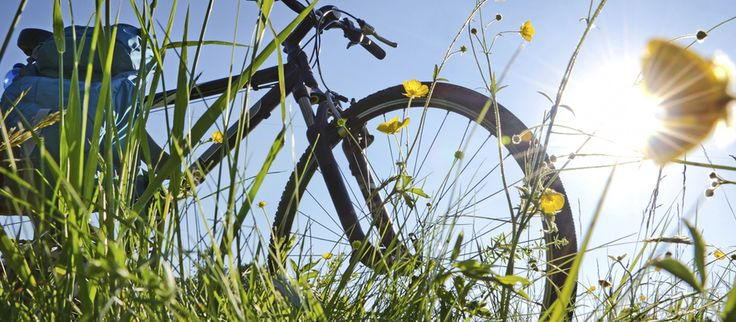 Here's an idea, you, your dog and the Atlantic Trail Cycle Route in beautiful Bude. The route includes a choice of trails and a walking section. #cornwall #dogfriendlycornwall #cycling #bluechipholidays