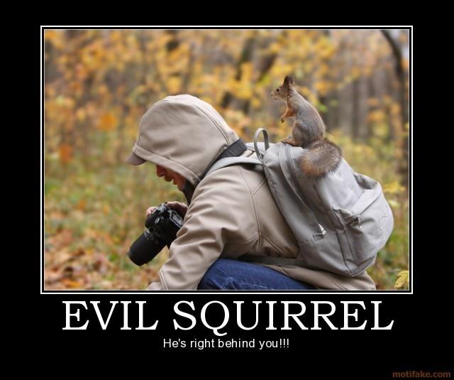 770cafe839b56af8ad25e7869a060ea5 chipmunks animals photos 11 best squirrels pure evil images on pinterest squirrels