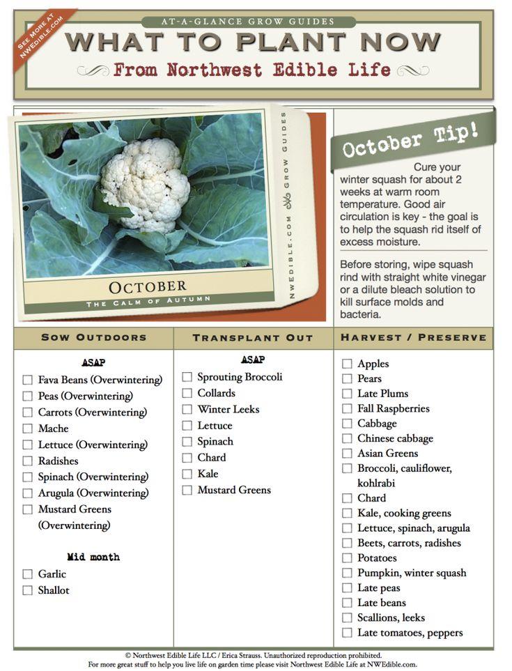 Les 74 meilleures images du tableau seasonal calendar sur - Calendrier des champignons comestibles ...