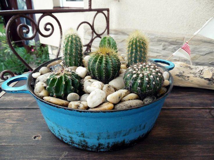 Kaktusz ültetés....nyár....Cactus planting...summer...