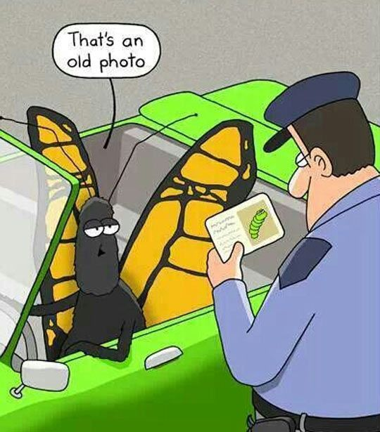 To Be Fair, He Could Fly Away - funny pictures #funnypictures