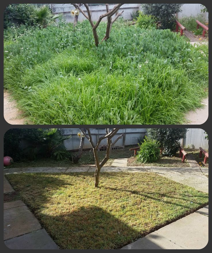 Lawn Mowing, Edging, Weeding and General Tidy. What can Trusted do for you?