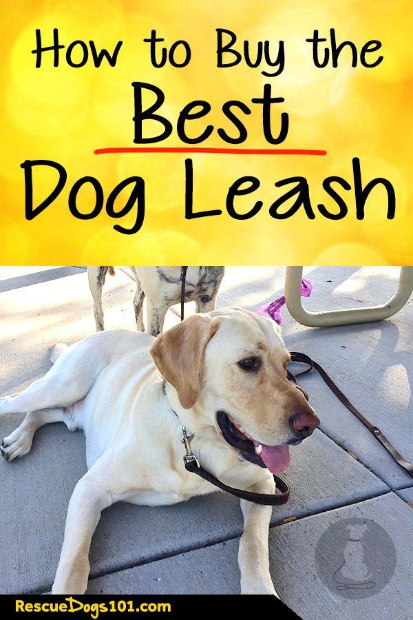 How To Choose The Best Dog Leash Dog Leash Dogs Dog Training