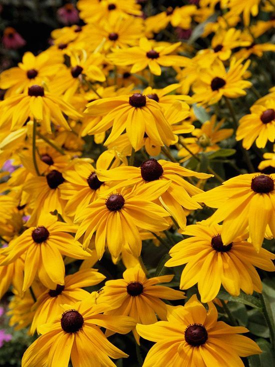 Best 25 yellow perennials ideas on pinterest Better homes and gardens flower bed designs
