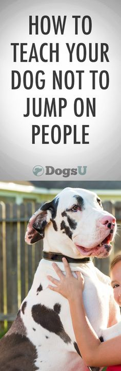 This is probably the single biggest problem people ask dog trainers about... http://iheartdogs.com/how-to-make-your-dog-stop-jumping-on-people/?utm_source=PinterestHowNotJump&utm_medium=link&utm_campaign=PinterestHowNotJump