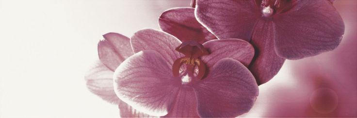 Decor faianta alba flori mov Abrila inserto Flower B Paradyz  Cu acest model de decor faianta alba flori mov Abrila inserto Flower A Paradyz umpleti interiorul bucatariei cu amintirile cele mai frumoase din calatoriile dumneavoastra.  Într-un singur loc poți fi răsfățat de flora unică, în altul prin modernitatea si stilul cosmopolit al orașului. Toate aceste le puteti gasi in noua colectie de faianta si gresie pentru bucatarie Abrila / Purio. #faianta #faiantaflorimov #faiantaalbaflori