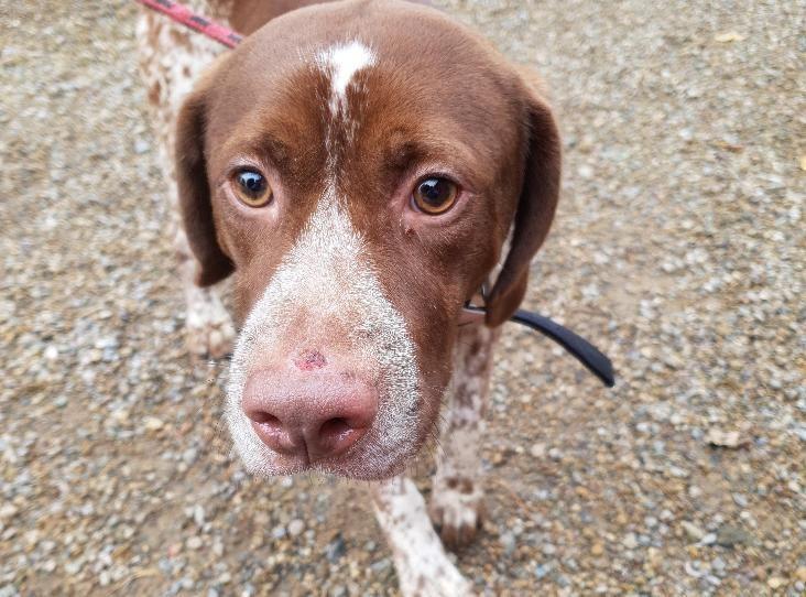 Franklin Find A Pet Rspca Org Uk Rehome Dog Dog Friends Dog Id