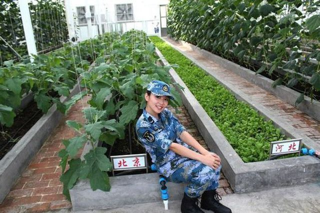 Chinese veggie gardens in the South China Sea Shanghaiist: Shanghai News, Food, Arts & Events