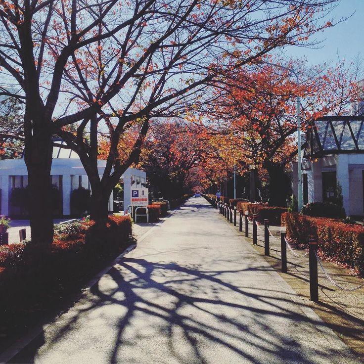 Późna jesień w #Aoyama  #tokio #tokyo #autumn #blogtroterzy #polishgirl #instagood #instatravel #travel #podróże #traveling #travelgram #japan #japonia #wanderlust #ig_japan #igworldclub #photooftheday #東京 #日本 by wkrainietajfunow