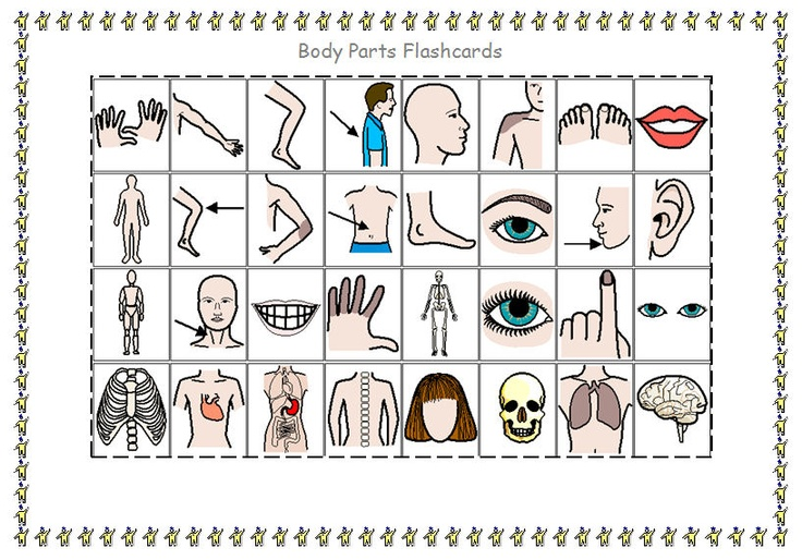 32 pictures / symbols of body parts to talk about, cut up and laminate, cut, stick and write about or even make into a lotto game.