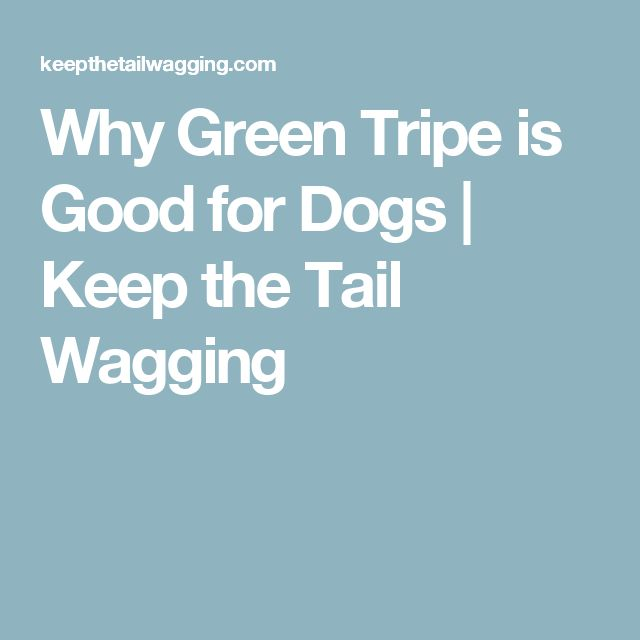 Why Green Tripe is Good for Dogs | Keep the Tail Wagging
