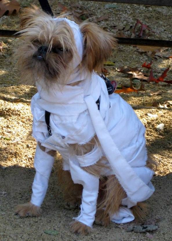 mummy dog costume like the ghost or spirit costume this one looks easy too you just need a tornout cloth or even bandages would do such a cheap dog