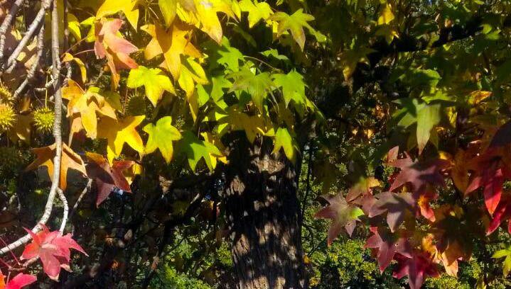 bienvenido otoño...