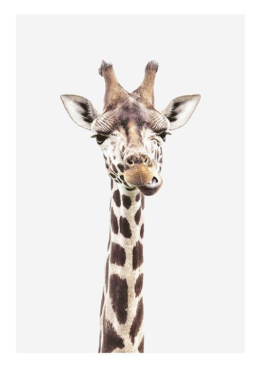 Fototavla med giraff | Poster med djurmotiv | Handla posters online