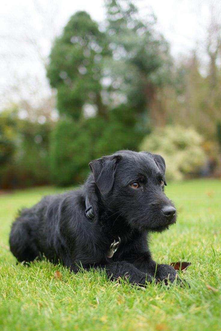 Kip Patterdale terrier | Pawshake