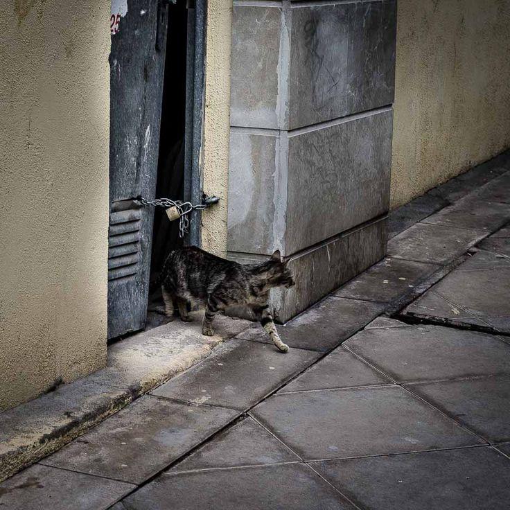 Saliendo de casa - http://fotos.valderramafdr.com/saliendo-de-casas/