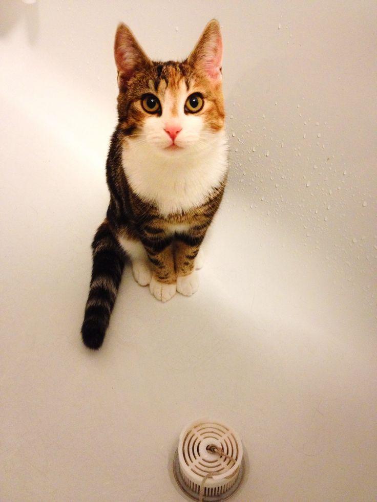 Cat, Kiwi tub, Jill G Rosenberg