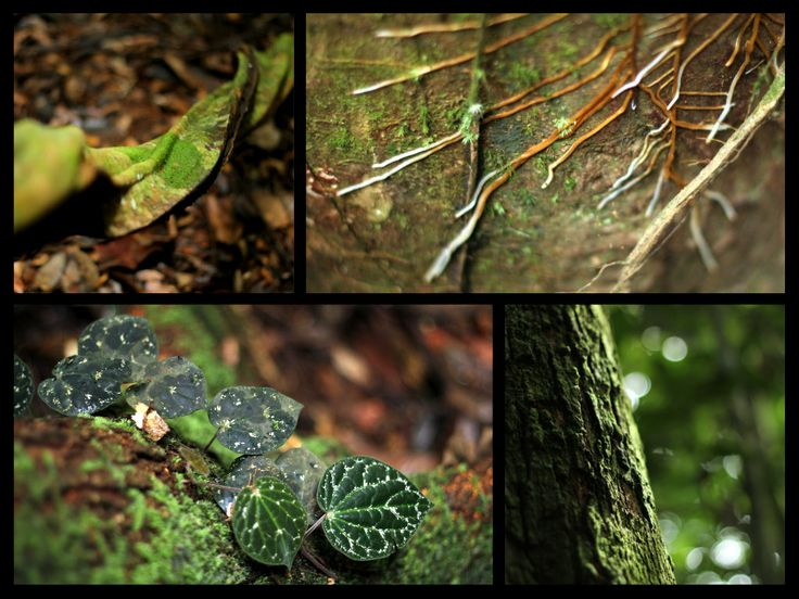 inside the primary forest 'Leuser Eco-system'