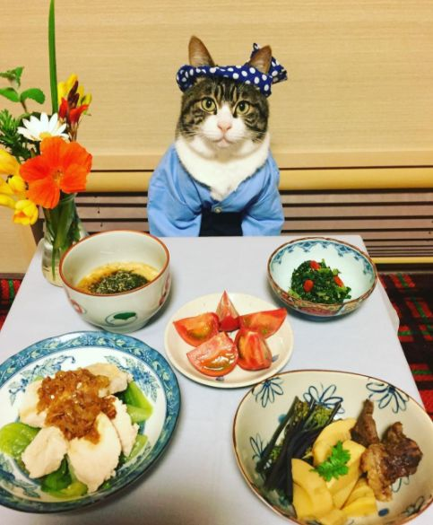 Cat Dresses Up To Have Dinner With His Mom Every Single Night