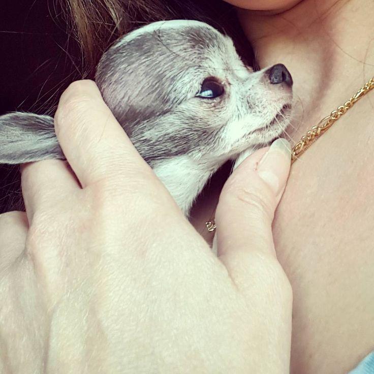 Aaaawwww, the puppy ifferdiffersis