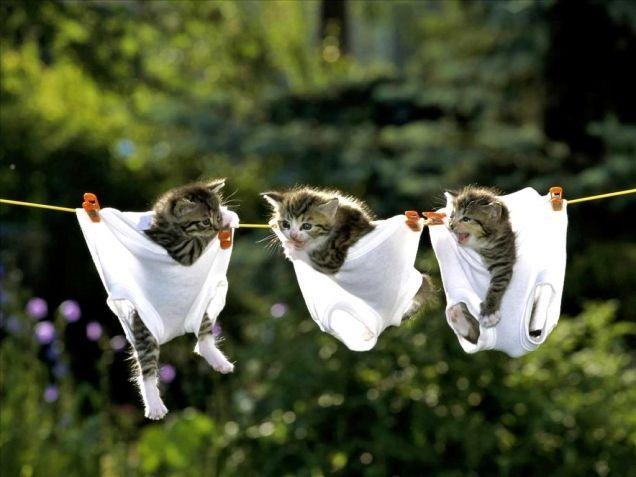 .secandose