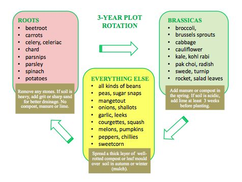 Crop rotation - what it means and why you should do it http://www.woollygreen.com/2014/02/07/vegetable-gardening-crop-rotation/