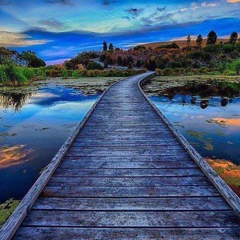 Terrific photo by @josbuurmans of Pekapeka Wetlands Boardwalk #greatthingsgrowhere