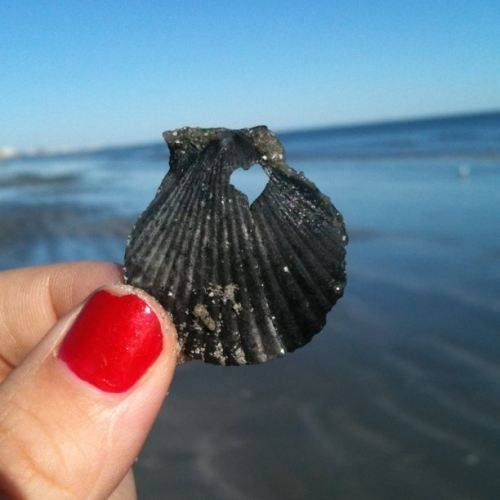 <3 in a shell.